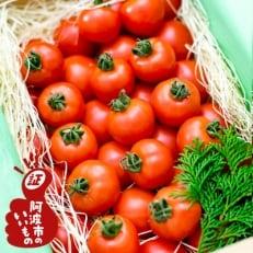 【1月発送】フルーツトマト「星のしずく」 900g