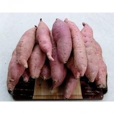 やまもと野菜工房のさつまいも「紅はるか」 5kg