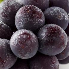 【人気のブドウ】巨峰 約1.8kg 信州グルメ市場