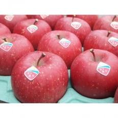 【ふじ発祥の地】藤崎町産りんご 贈答用サンふじ約5kg