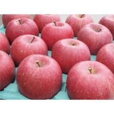 【ふじ発祥の地】藤崎町産りんご 家庭用サンふじ約10kg