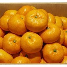 【1月下旬より発送】【JAかながわ西湘】濃厚な甘さが自慢の「温州みかん(青島)」5kg