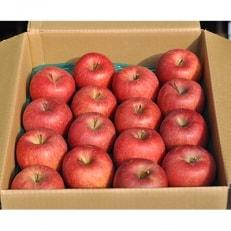 【先行予約】信州りんご サンふじ 5kg箱 秀品12~20玉