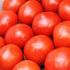 フルーツトマト「アメーラ」約1kg B427