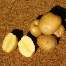 木村秋則式栽培方法のじゃがいも キタアカリ5kg