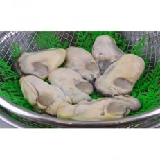 国産高級牡蠣Lサイズむき身 約850g B253