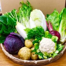 中元寺旬の実り野菜セット(旬の野菜7~9種類程度)