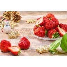 【老舗果物専門店特選】フルーツソムリエが選んだ『冬あまおう』 2パック