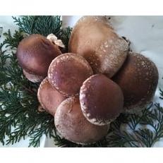 福が住む里 原木しいたけ1.3kg