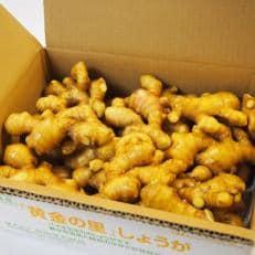 高知県産】黄金しょうが 約4kg
