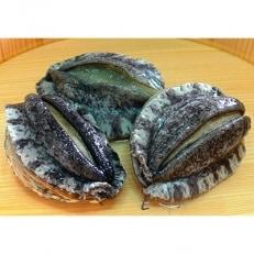 やわコリ食感紀州の蝦夷アワビ 【5-6個入】