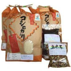 長浜産コシヒカリ白米15kg、黒米300g、五色米300g