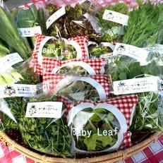 ふるさと新鮮野菜スモールパック