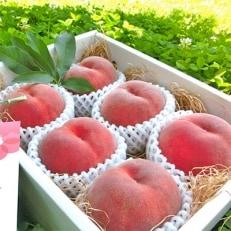 農園直送 樹上完熟桃「ジュエリーピーチ(R)」1.5kg