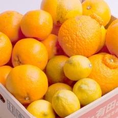 旬の柑橘詰合せ7.5kg