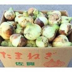 佐賀県産 新玉ねぎ 10kg