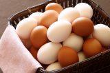 卵の殻(から)の色が違う理由