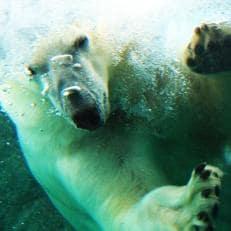 日本平動物園ペア入園券+バックヤード(2019年12月8日指定)へご招待+オリジナルグッズ