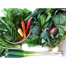 新鮮朝採れ野菜セット