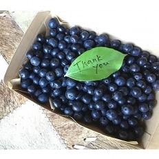 朝摘みブルーベリー 350g×2箱