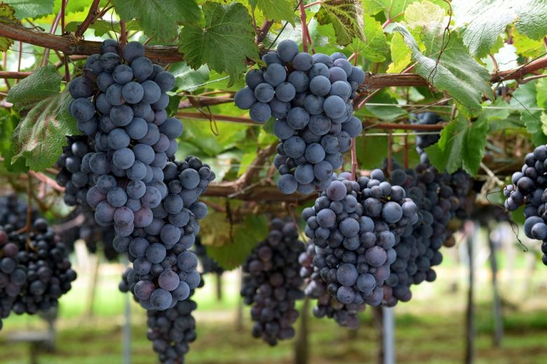 日本国内のワインの産地