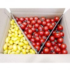 フルーツトマト「太陽のめぐみ」2kg(フルティカ1500g、ティポ500g)