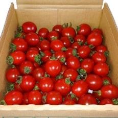 ミニトマト「ころころ」1.3kg