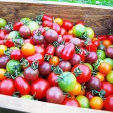 オーガニック(有機栽培)カラフルトマト詰め合わせ