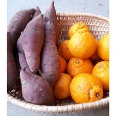 みかん農家 坂元さんちのデコポンご家庭用2kg程度+熟成芋紅はるか3kg セット
