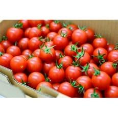 ミニトマト(ラブリーさくら)1kg