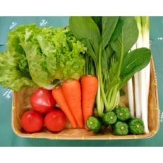 【空の駅 風和里しばやま】旬野菜の詰め合わせ「大地の恵みセット」7~8種