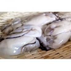 魚市場厳選 冷凍むき身牡蠣(加熱調理用)約1kg×2袋