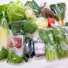 旬の新鮮野菜セットたっぷり15種以上