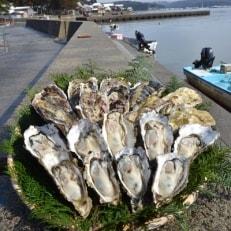 能登穴水の牡蠣(殻付)加熱用3kg