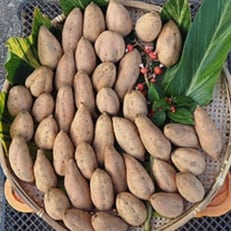 種子島産安納黄金10kg