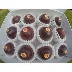 奄美の完熟パッションフルーツ約3kg(30~40個)
