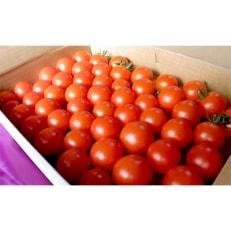 観音寺市 井下農園のフルーツトマト 約1kg