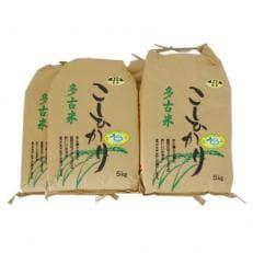 【令和元年産】新米特別栽培米コシヒカリ多古米 玄米20kg