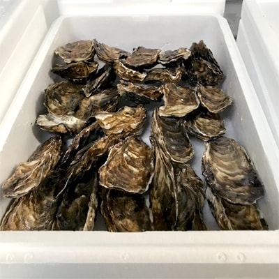 生牡蠣 大サイズ 約2.8kg(25個入)