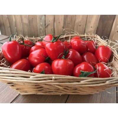 甘さ抜群!!トマト嫌いも食べられるトマトベリー H004-029