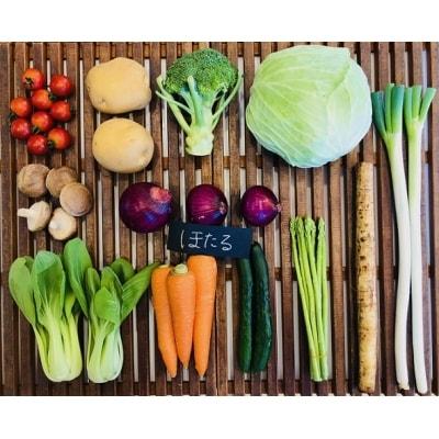 【毎月お届け】むなかた旬の野菜お任せセット 11~12品【定期便】_STB35