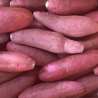 鹿児島県産紅はるか7~7.5kg