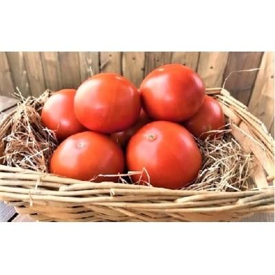 1月~6月毎月発送 プレミアムフルーツトマトの定期便 6回コースH004-037