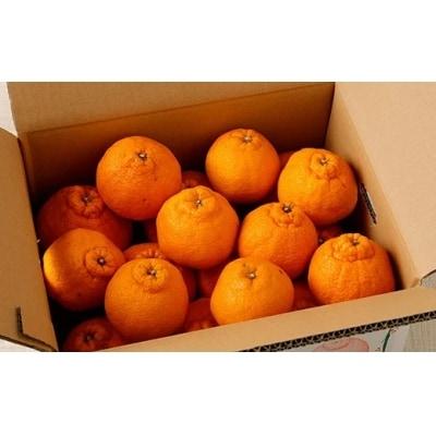【訳あり 定期便4回】天草 下浦地区の農家さんが愛情込めて育てた柑橘4種