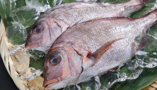 ふるさと納税で「鯛」がもらえる!【刺身・塩釜・コスパ抜群の返礼品を紹介】