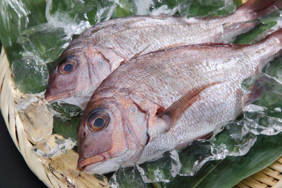 鯛(タイ)
