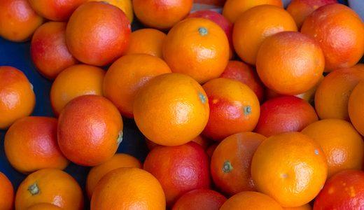 ふるさと納税 柑橘の島「大崎上島町」のジューシーな返礼品5選
