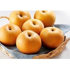 【2020年8月中旬以降発送】和歌山県産 旬の樹上完熟梨 約4kg