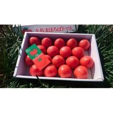 【産地直送新鮮野菜】高知県産ブランドトマト「土佐まほろばトマト」フルーツトマトセット1.5~2kg