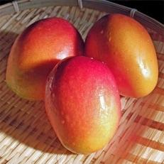 「南国宮崎からお届け」完熟マンゴー中玉2Lサイズ3個